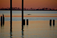 One pelican and pylons at sunset on East Beach