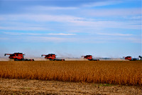 Tractors and Combines in the Delta